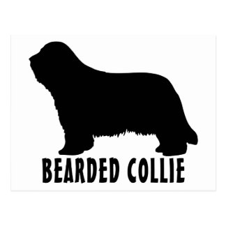 2315042007 Bearded Collie (Animal) Postcard