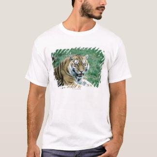 24103189 T-Shirt