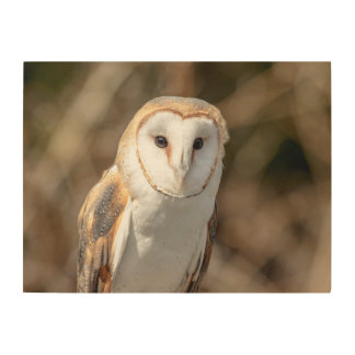 24x18 Barn Owl Wood Wall Art