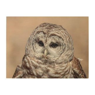 24x18 Barred Owl Wood Wall Decor