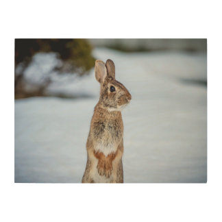 24x18 Rabbit in the snow Wood Wall Art