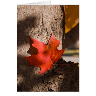 2787 Fall Maple Leaf Greeting Card