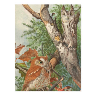 2 angry vintage owls in a tree postcard