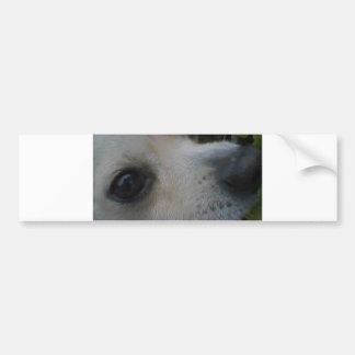 2 chihuahua bumper sticker