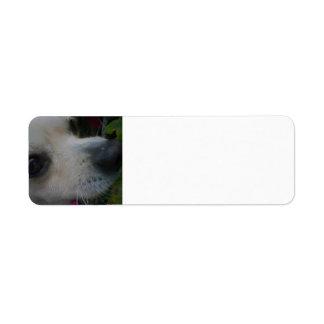 2 chihuahua return address label