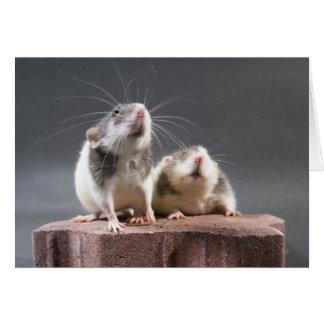 2 cute rats card