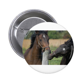 2 Horses Chewing a Fence Post Buttons