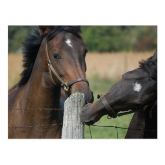 2 Horses Chewing a Fence Post Postcard