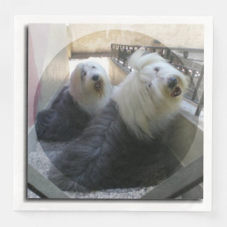2 old english sheepdogs disposable serviette