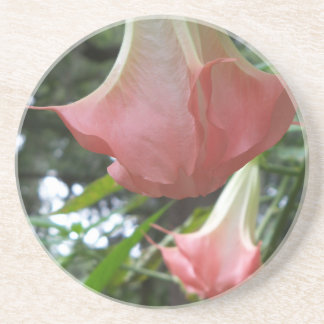 2 pink Angels trumpet flowers Coaster