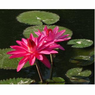 2 pink water lilies Photo Sculpture #50  005050