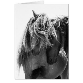 2 Sable Island Stallions Wild Horse Greeting Card