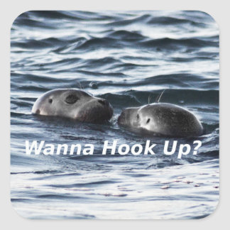 "2 Seals: ""Wanna Hook Up"" (Making a Pass) Square Sticker"