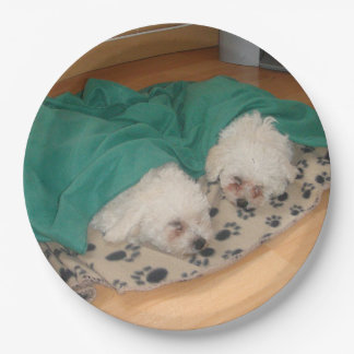 2 Sleepy_Bichon_Puppies Paper Plate