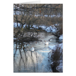 2 Swans in Winter Greeting Card