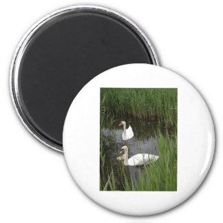 2+swans fridge magnets