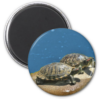 2 turtles  on a rock magnet