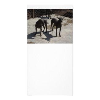 2 xolos photo card