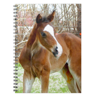 2CUTE HORSE FOAL BABY PONY NOTEBOOK