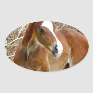 2CUTE HORSE FOAL BABY PONY OVAL STICKER