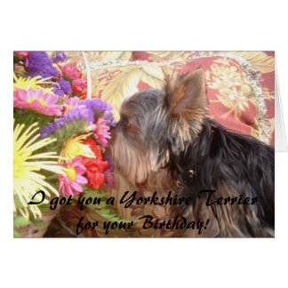 314855-7661677, I got you a Yorkshire Terrier f... Card
