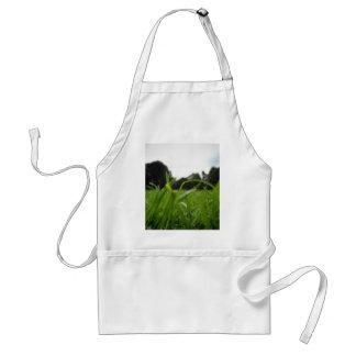 34.jpg standard apron
