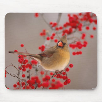 350 MOUSE PAD
