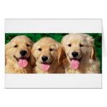3 Amigos Cards