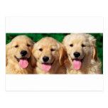 3 Amigos Postcard