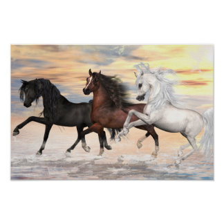 3 Arabians Value Poster Paper (Matte)