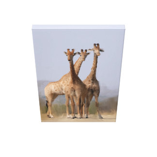 3 brothers canvas print