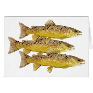 3 Brown Trout Card