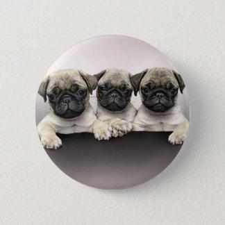 3 Cute Pug Pippies 6 Cm Round Badge