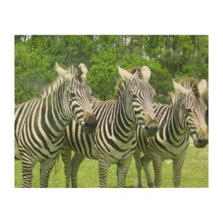 3 Cute Zebras Wood Print