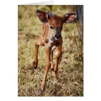 3 day old baby Nyala deer Greeting Card