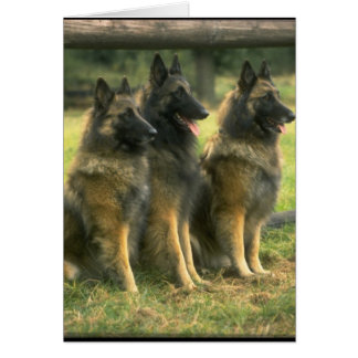 3-German Shepherds Card