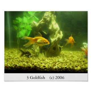 3 Goldfish Poster