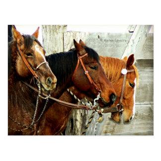 3 Horse Heads Postcard