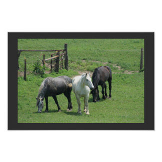 3 Horses, poster with faux matte