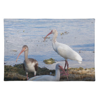 3 Ibis on the shore of Florida Bay Placemat