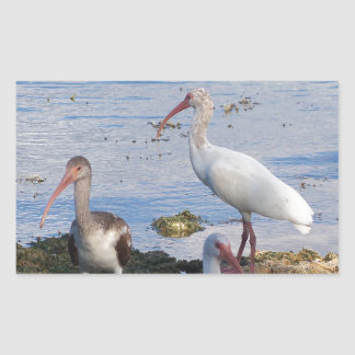 3 Ibis on the shore of Florida Bay Rectangular Sticker