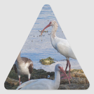 3 Ibis on the shore of Florida Bay Triangle Sticker
