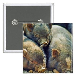 3 Little Pigs Pinback Buttons