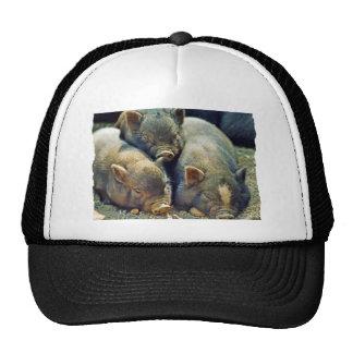 3 Little Pigs Hats