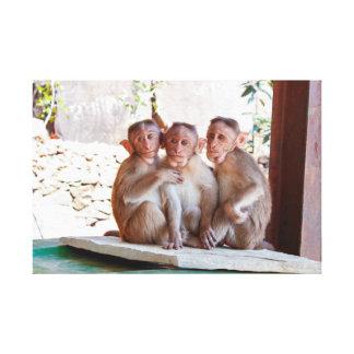 3 Monkeys Canvas Print