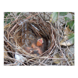 3 new born baby birds in a nest with do not remove postcard