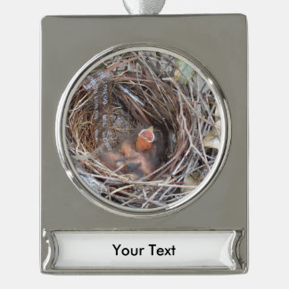 3 new born baby birds in a nest with do not remove silver plated banner ornament