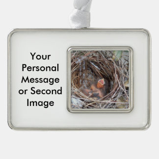 3 new born baby birds in a nest with do not remove silver plated framed ornament
