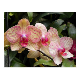 3 Orchids Post Card