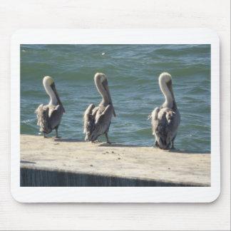3 Pelicans Mouse Pad